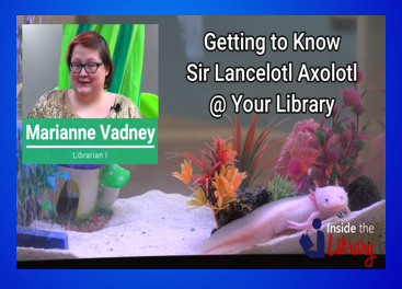 Screen Capture from Video on the Library Axolotl