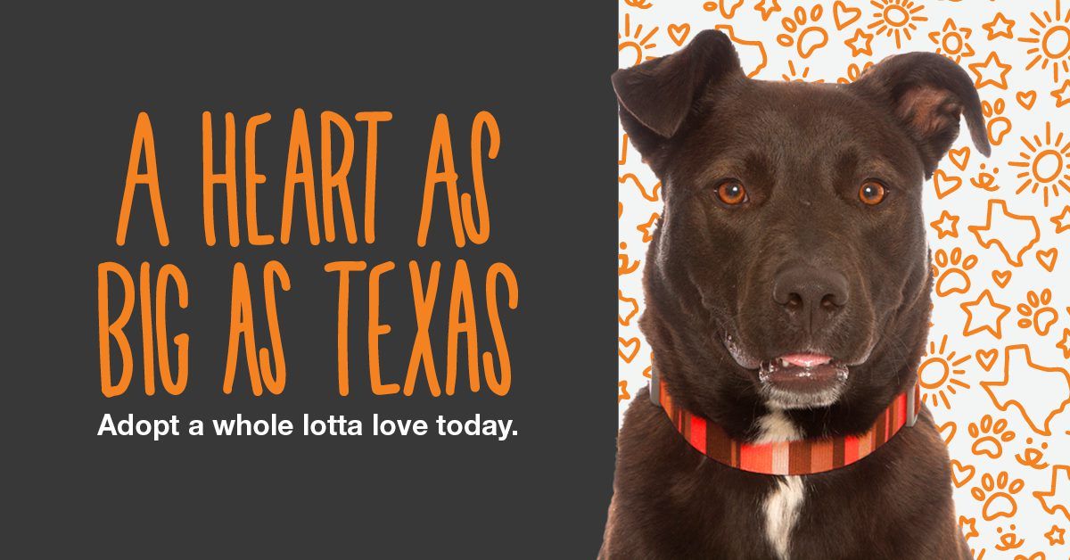 A Heart as Big as Texas - Adopt a Whole Lotta Love Today