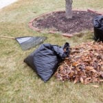 Raked Leaves